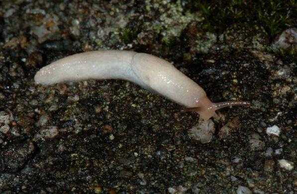 Kleine Und Dünne Würmer